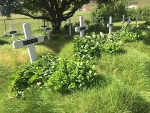 cimitero di Hofskirka islanda
